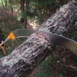 Silky Hayate Branch Cutting
