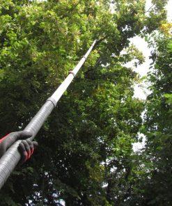 Using a Silky Hayauchi Pole Saw