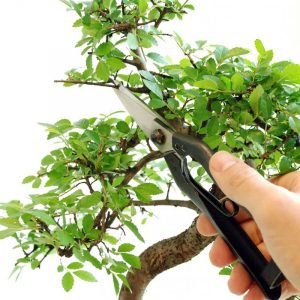 Okatsune Heavy Duty Bonsai Snips207