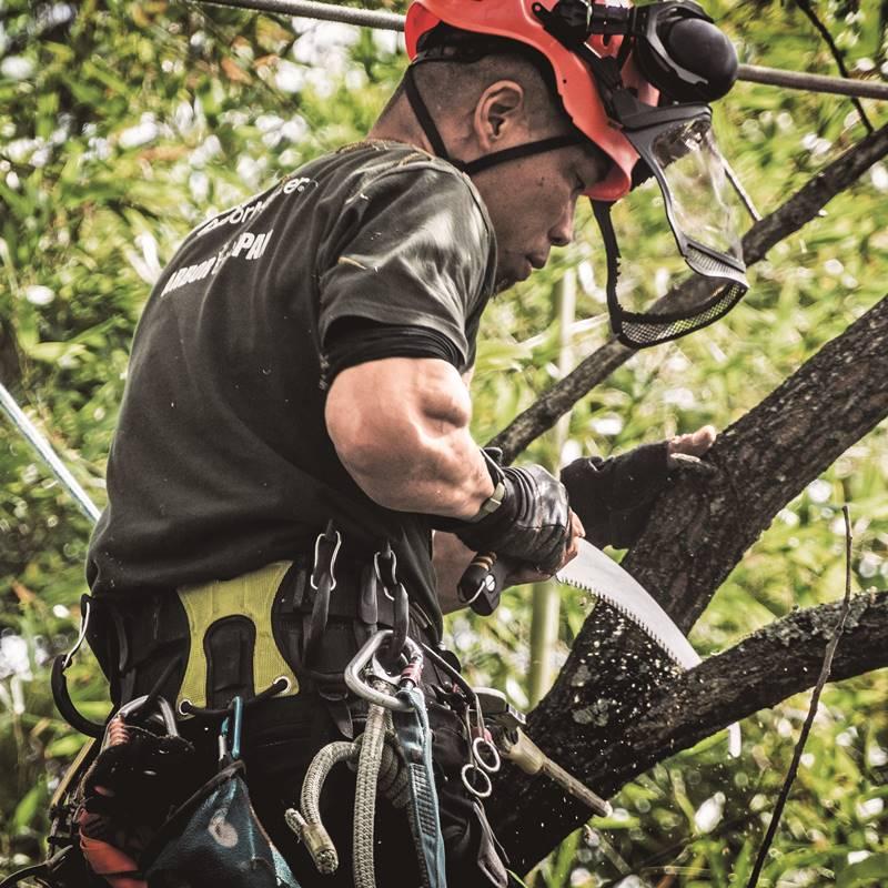 Silky Sugoi 36cm Arborist In Tree