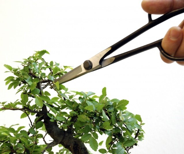 Using Okatsune Bonsai Precision Scissors 206