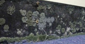 Mould Behind The Wall