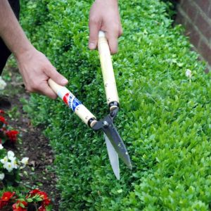 Trimming the Box Hedge